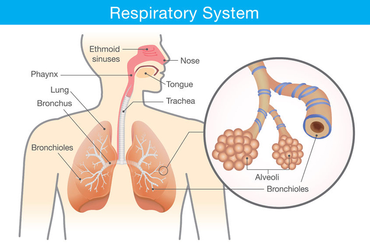 6 General Recommendations for Working with Clients with Respiratory Conditions